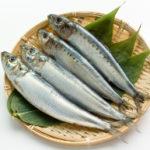 小ぶりの魚を選ぶと良い理由