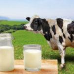 乳製品は毎日必要?食材の特徴を知ってどう位置付けるかが大切